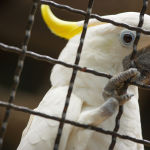Indien: Vögel dürfen nicht mehr in Käfigen gehalten werden