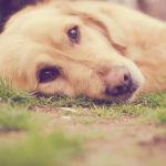 Neuseeland: Tiere werden rechtlich als fühlende Wesen anerkannt