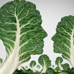 Vegan-Trend erreicht breite Bevölkerung