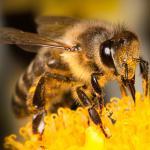 Aldi Süd will bienengiftige Pestizide verbannen