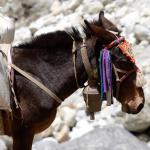 Weltweit: Tiere bei der Arbeit und wie sie für uns schuften müssen